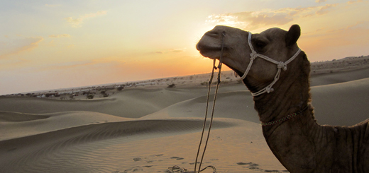 Some of the Best Golden Sand Dunes Experiences at Jaisalmer